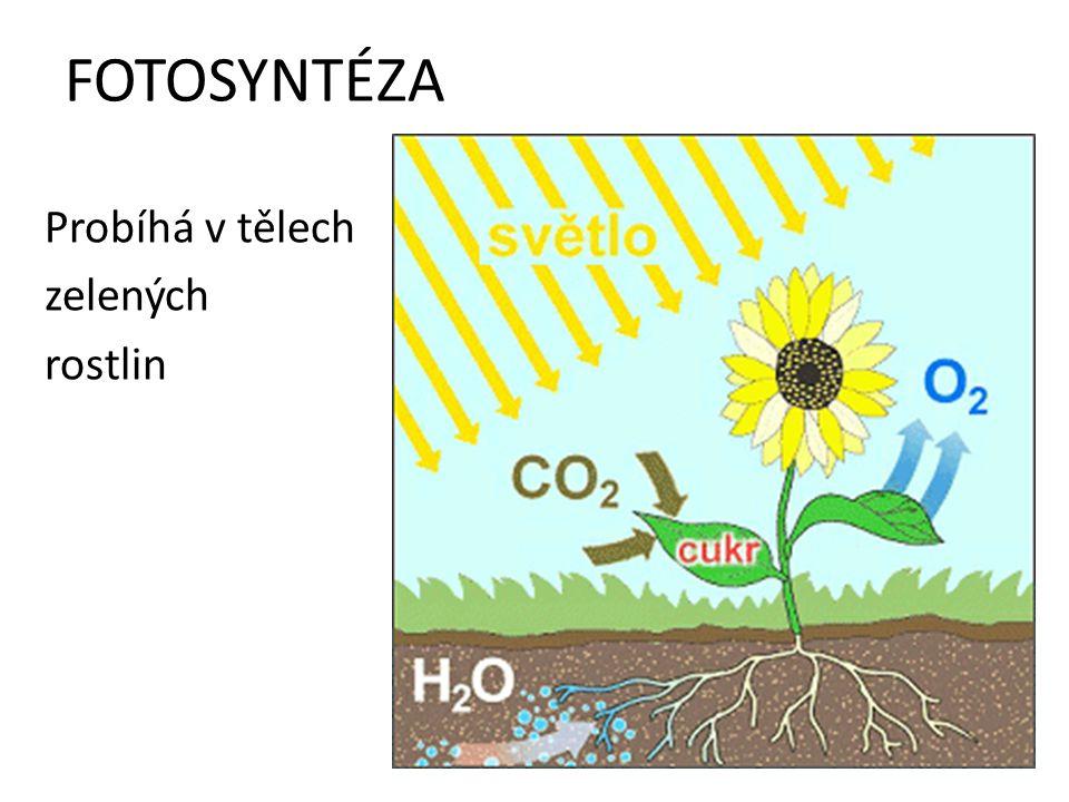 FOTOSYNTÉZA Probíhá v tělech zelených rostlin