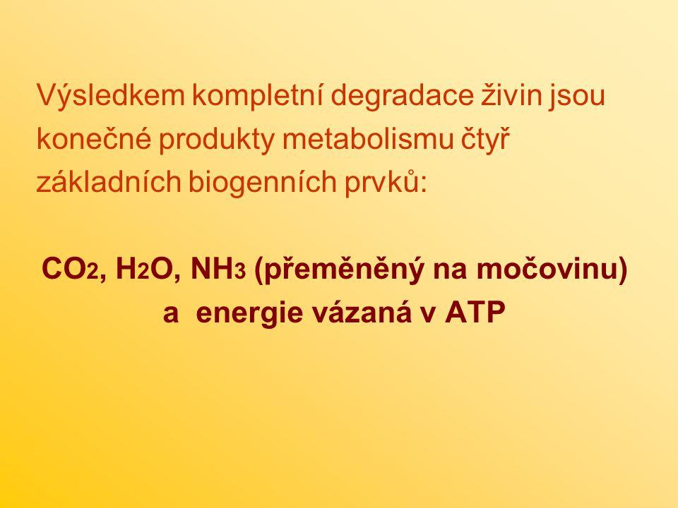 CO2, H2O, NH3 (přeměněný na močovinu)
