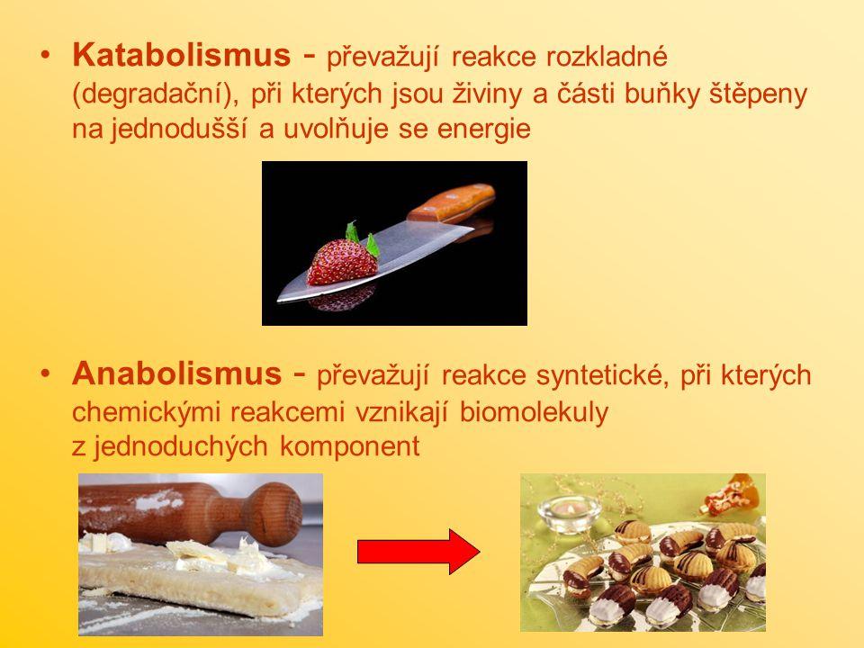 Katabolismus - převažují reakce rozkladné (degradační), při kterých jsou živiny a části buňky štěpeny na jednodušší a uvolňuje se energie