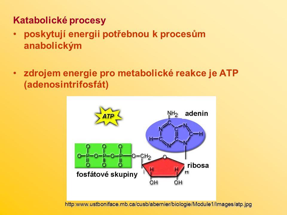 poskytují energii potřebnou k procesům anabolickým