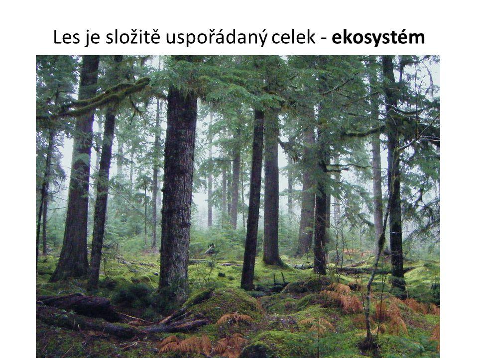 Les je složitě uspořádaný celek - ekosystém