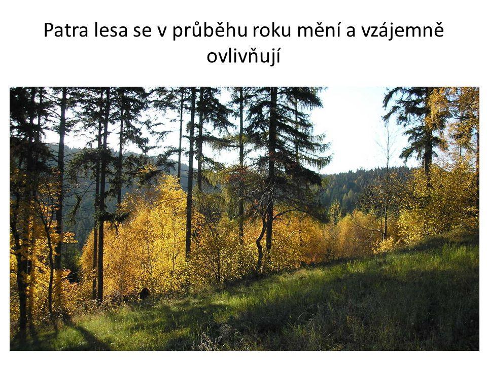 Patra lesa se v průběhu roku mění a vzájemně ovlivňují