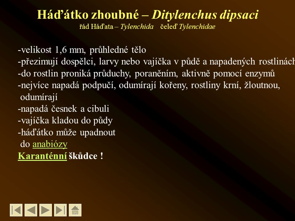 Háďátko zhoubné – Ditylenchus dipsaci řád Háďata – Tylenchida čeleď Tylenchidae