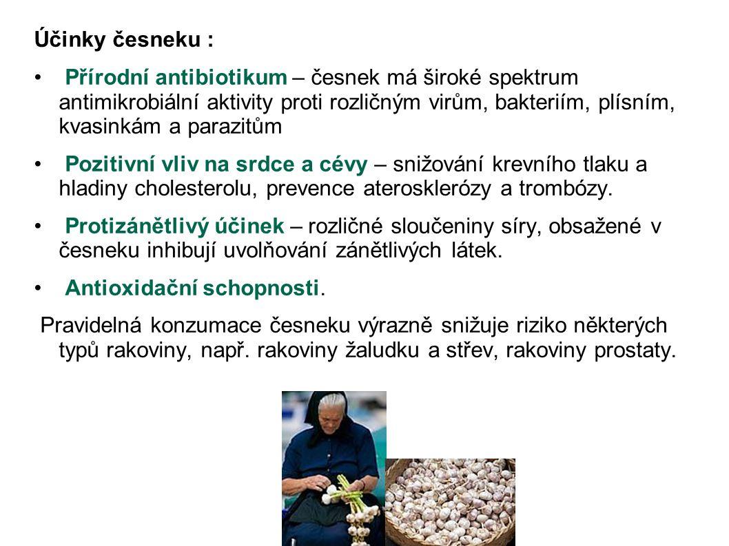 Účinky česneku :