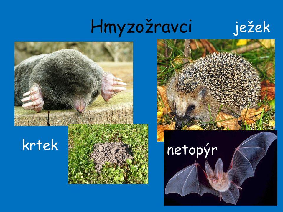 Hmyzožravci ježek krtek netopýr