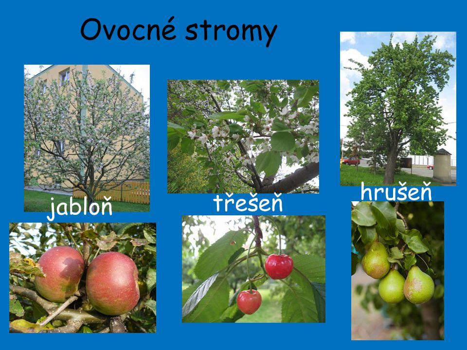 Ovocné stromy hrušeň třešeň jabloň