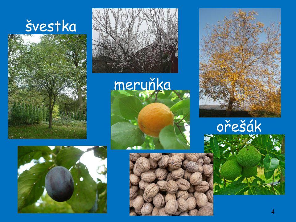 švestka meruňka ořešák