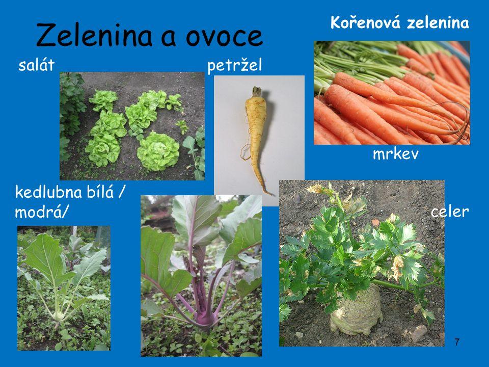 Zelenina a ovoce Kořenová zelenina salát petržel mrkev