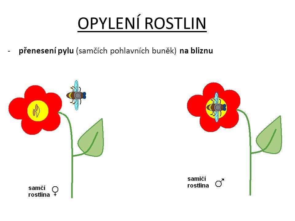 OPYLENÍ ROSTLIN přenesení pylu (samčích pohlavních buněk) na bliznu