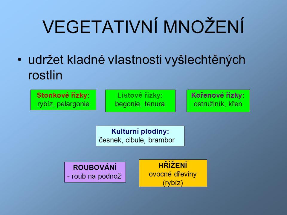 ovocné dřeviny (rybíz)
