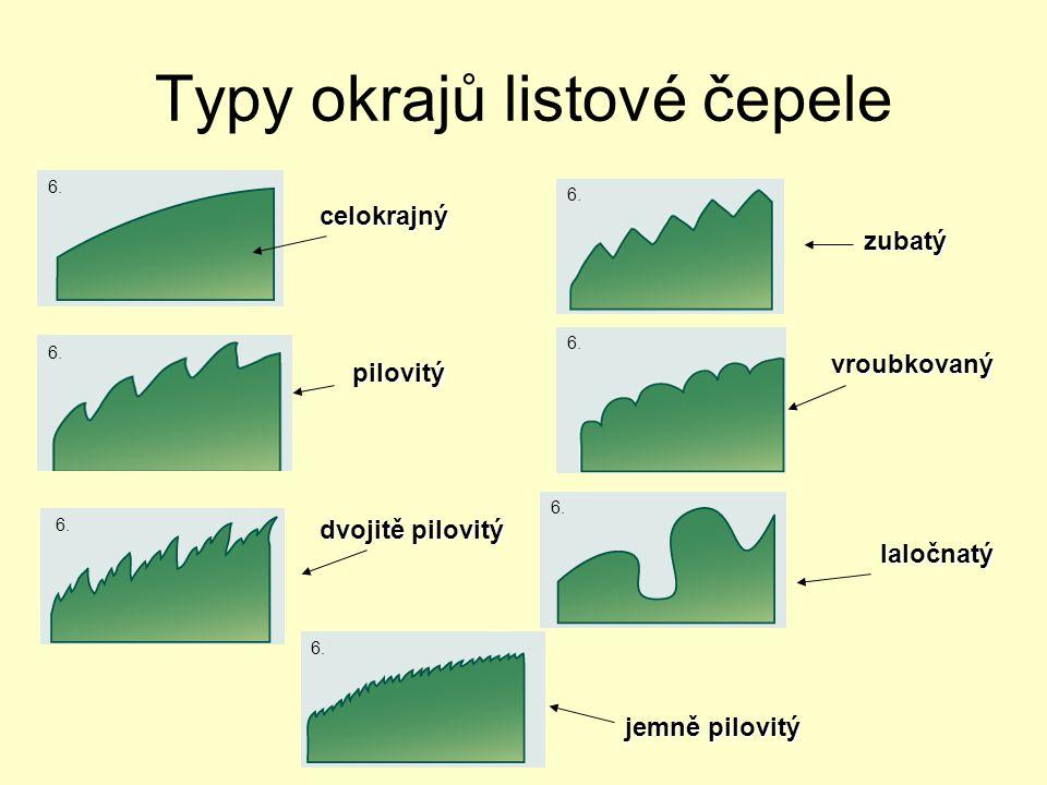Typy okrajů listové čepele