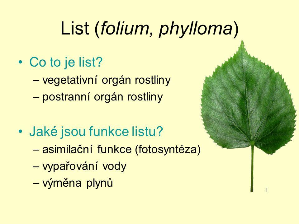 List (folium, phylloma)