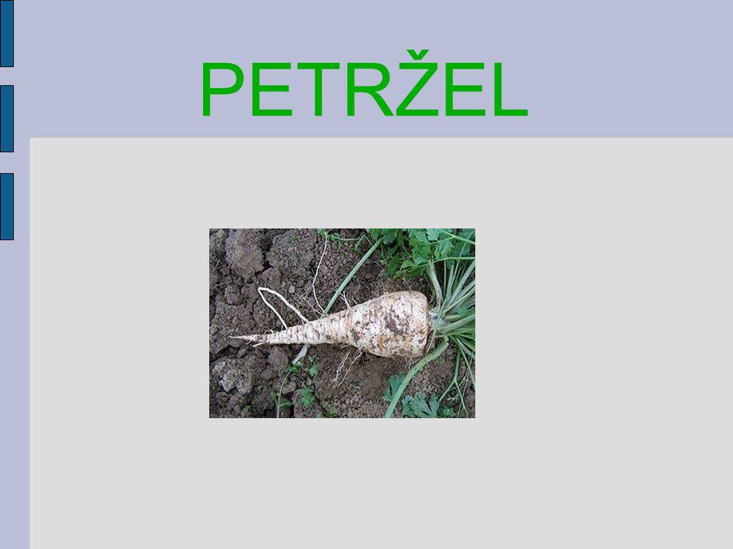 PETRŽEL