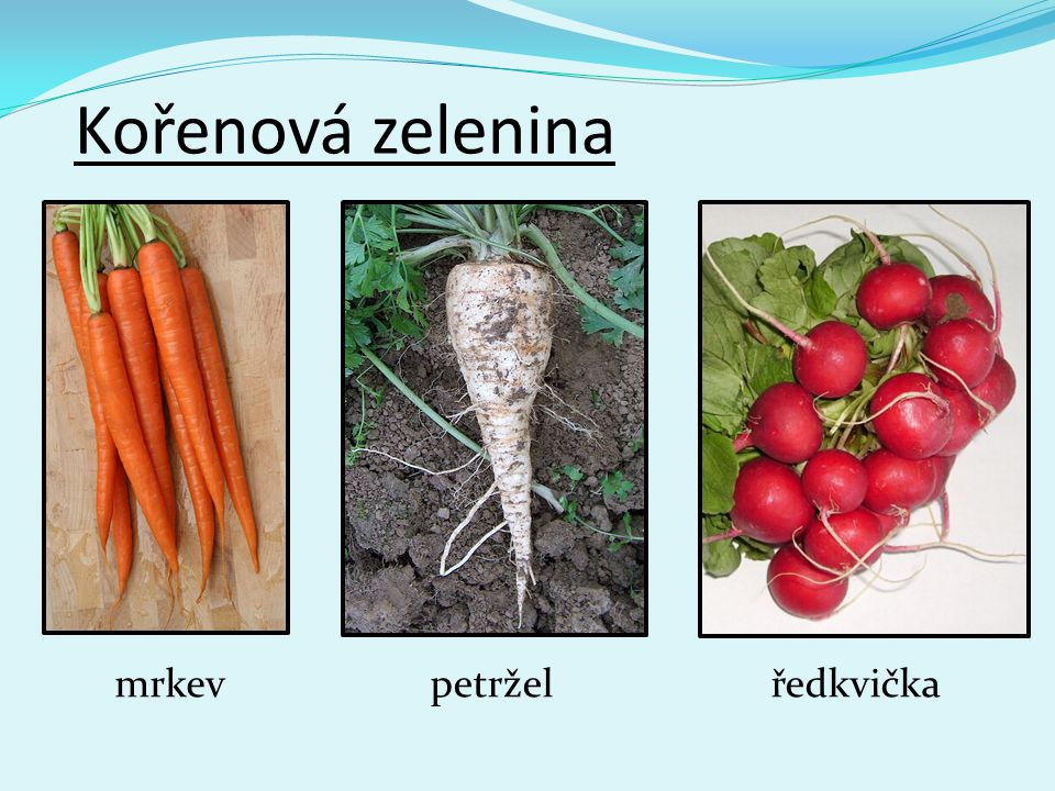 Kořenová zelenina mrkev petržel ředkvička