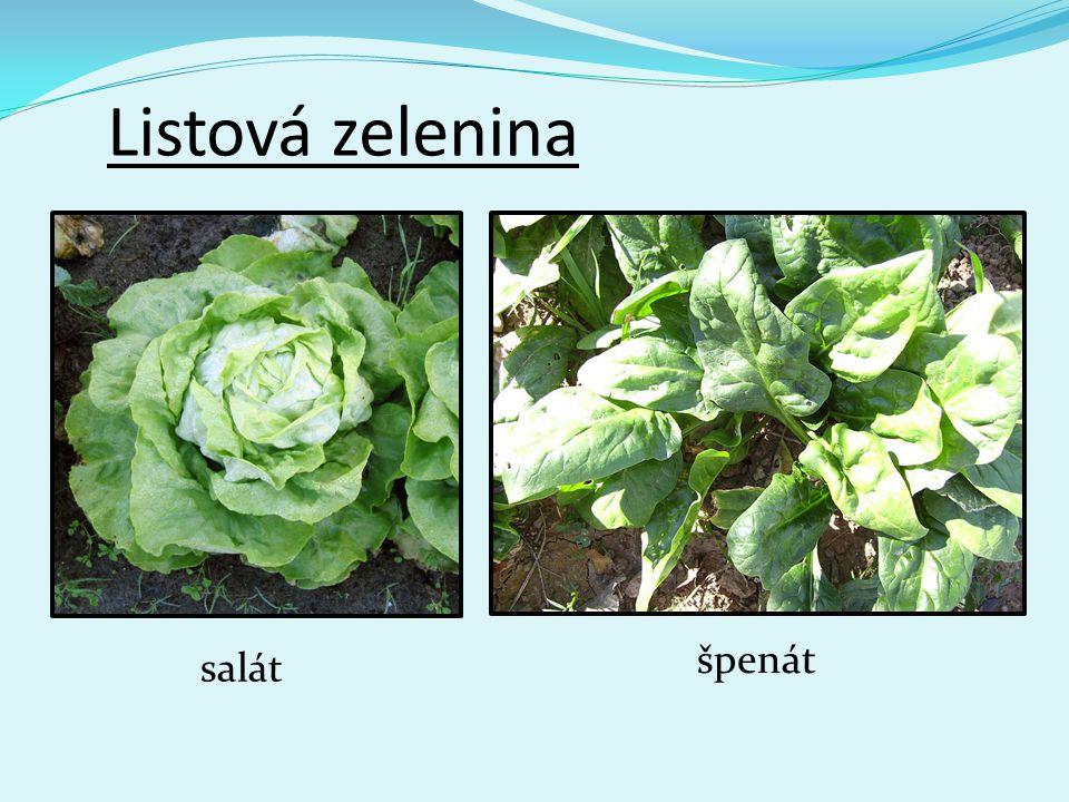 Listová zelenina špenát salát
