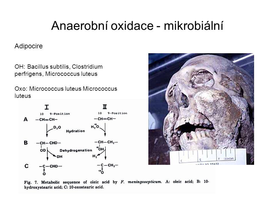Anaerobní oxidace - mikrobiální