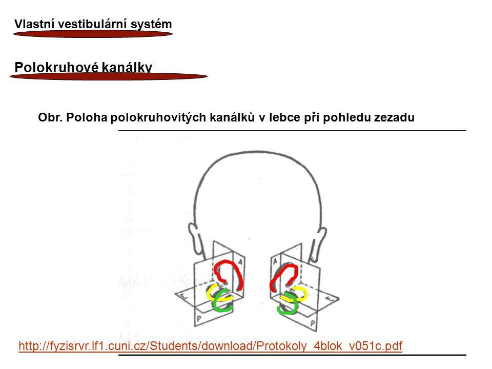 Polokruhové kanálky Vlastní vestibulární systém