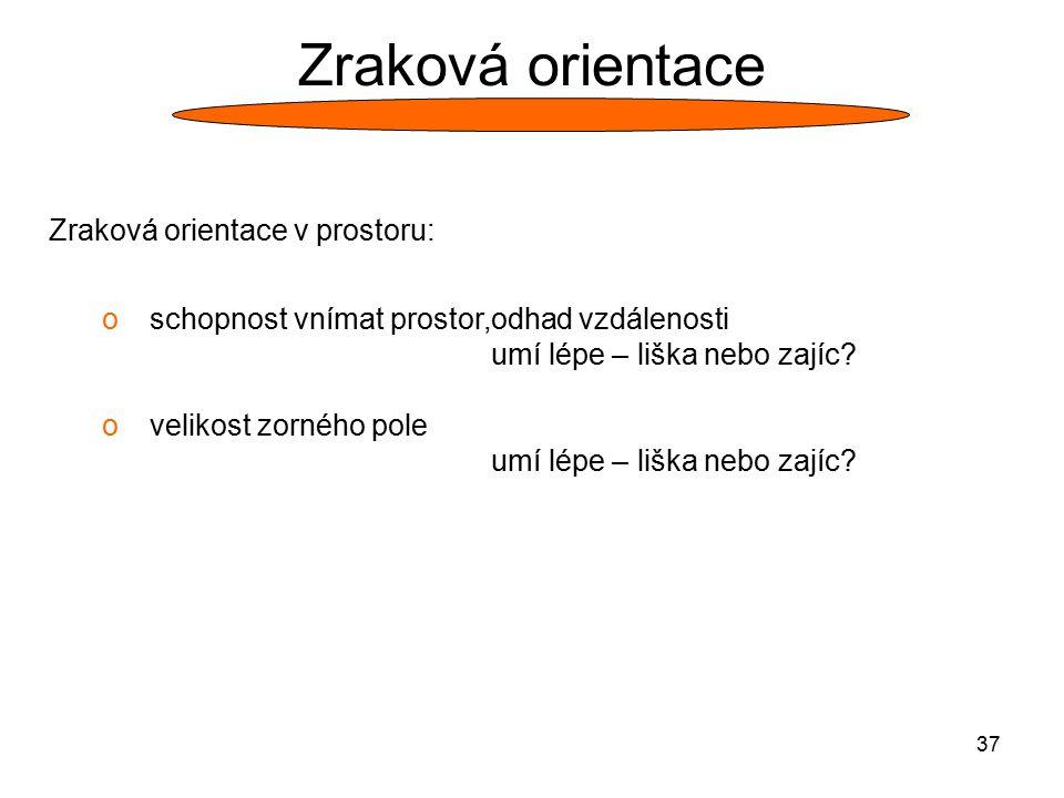 Zraková orientace Zraková orientace v prostoru: