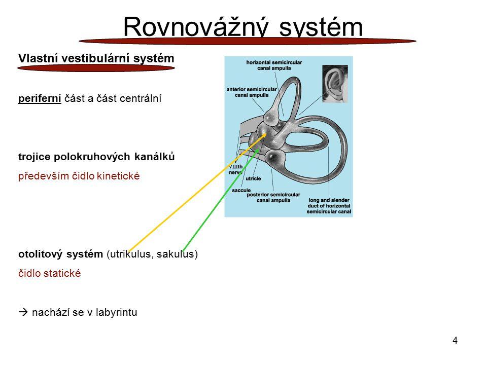Rovnovážný systém Vlastní vestibulární systém