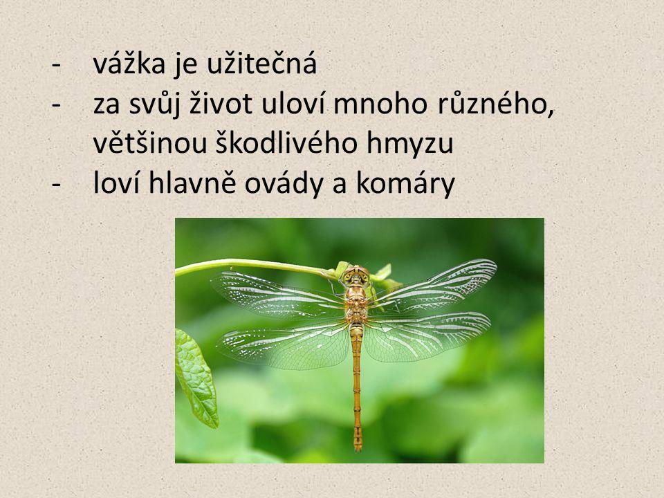 vážka je užitečná za svůj život uloví mnoho různého, většinou škodlivého hmyzu.