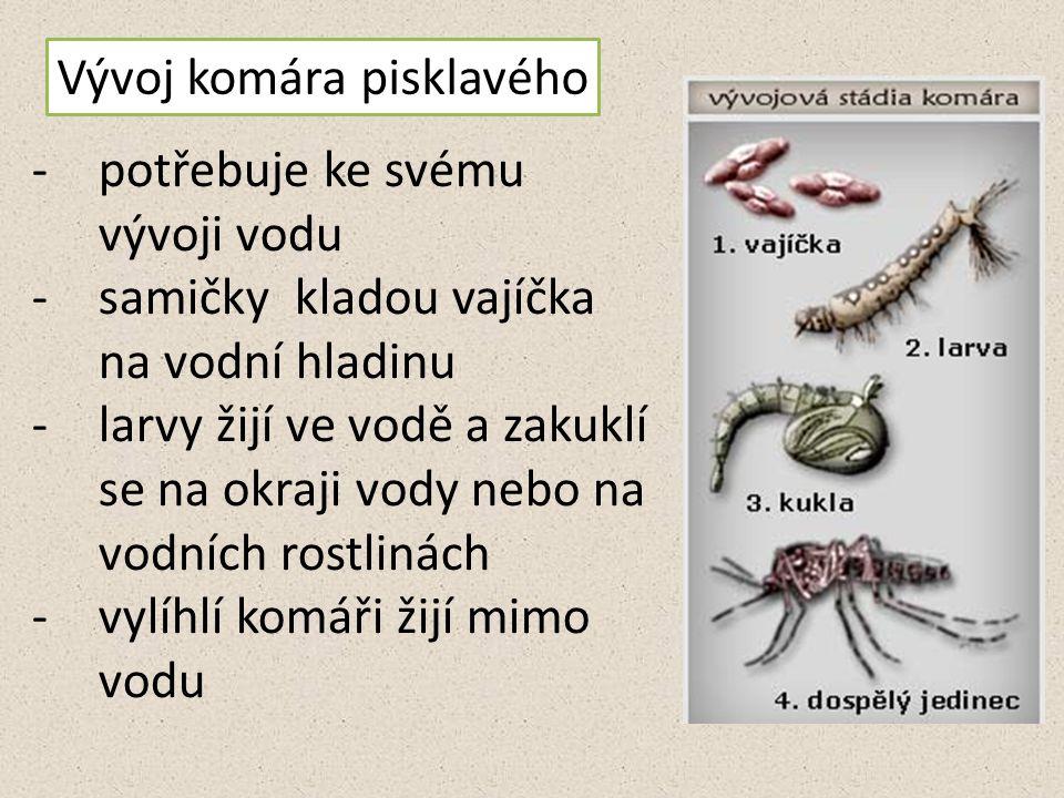 Vývoj komára pisklavého