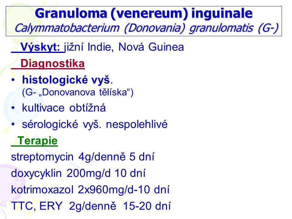 Granuloma (venereum) inguinale Calymmatobacterium (Donovania) granulomatis (G-)