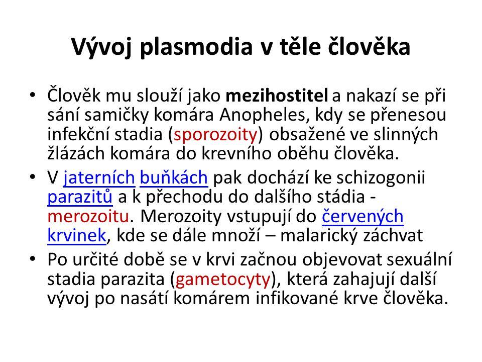 Vývoj plasmodia v těle člověka