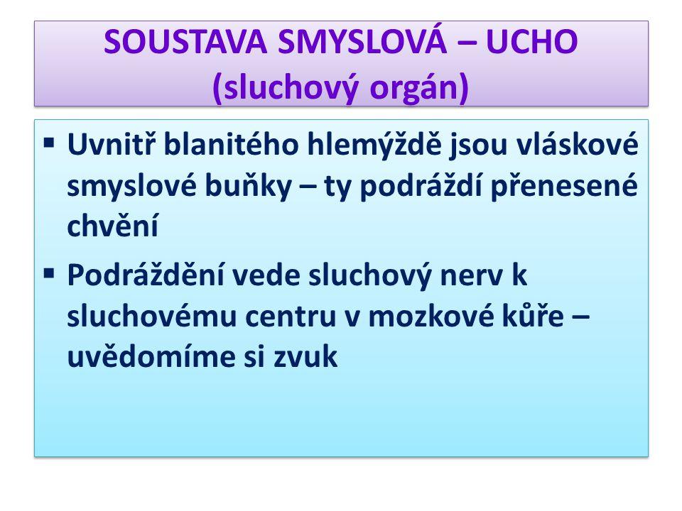 SOUSTAVA SMYSLOVÁ – UCHO (sluchový orgán)