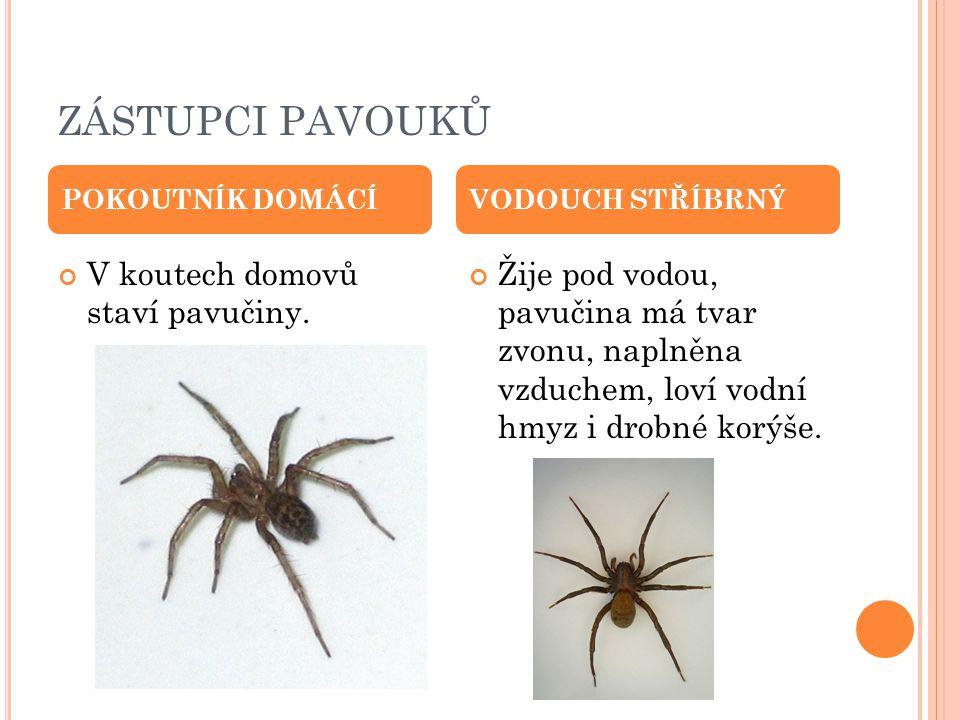 ZÁSTUPCI PAVOUKŮ V koutech domovů staví pavučiny.
