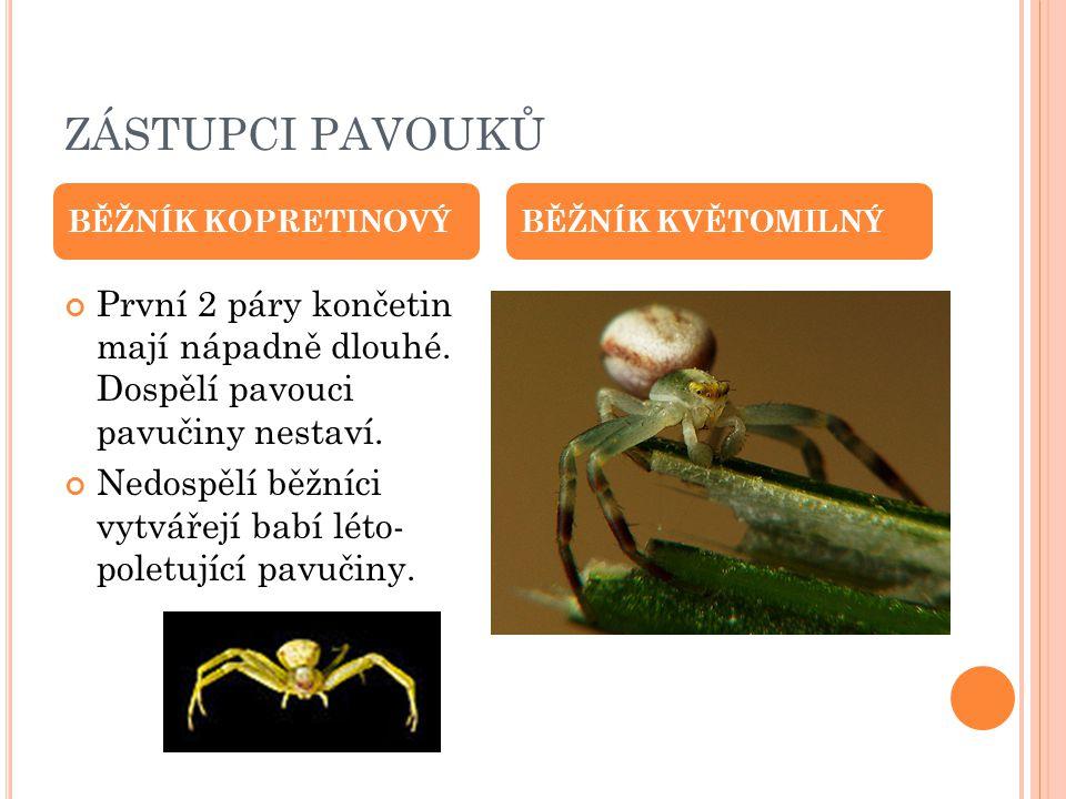 ZÁSTUPCI PAVOUKŮ BĚŽNÍK KOPRETINOVÝ. BĚŽNÍK KVĚTOMILNÝ. První 2 páry končetin mají nápadně dlouhé. Dospělí pavouci pavučiny nestaví.
