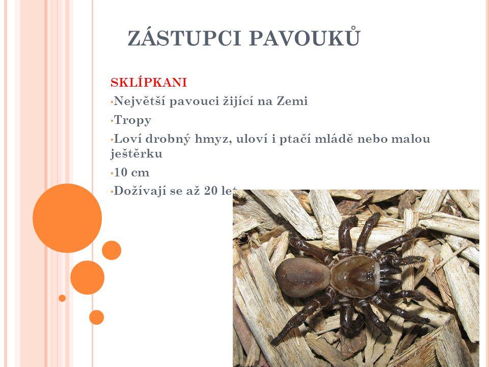 ZÁSTUPCI PAVOUKŮ SKLÍPKANI Největší pavouci žijící na Zemi Tropy