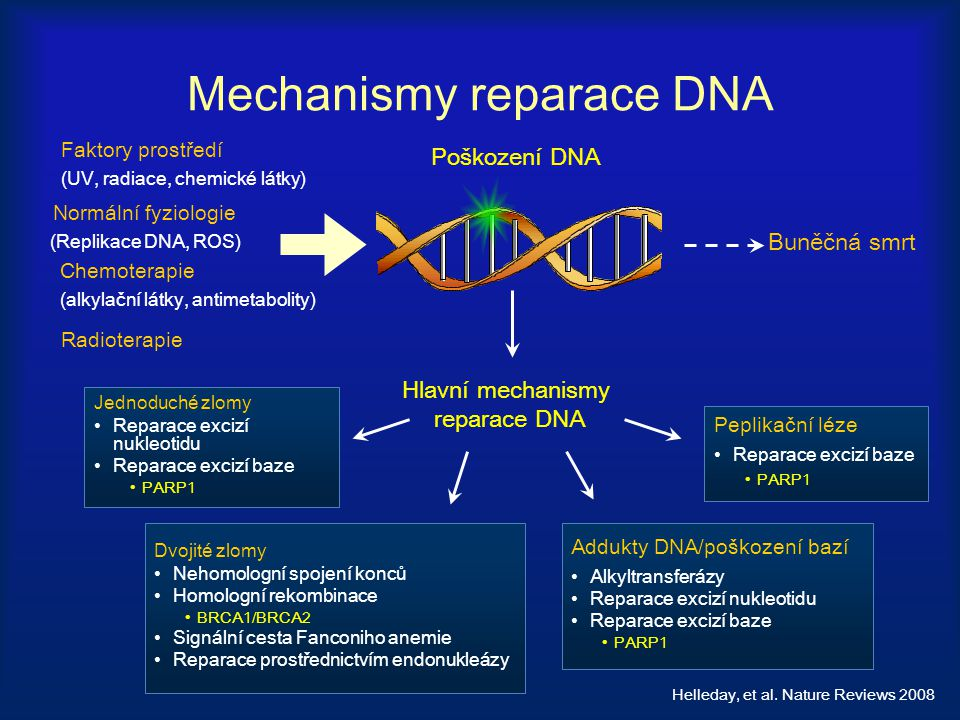 Mechanismy reparace DNA