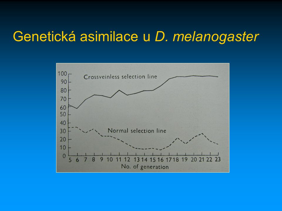 Genetická asimilace u D. melanogaster