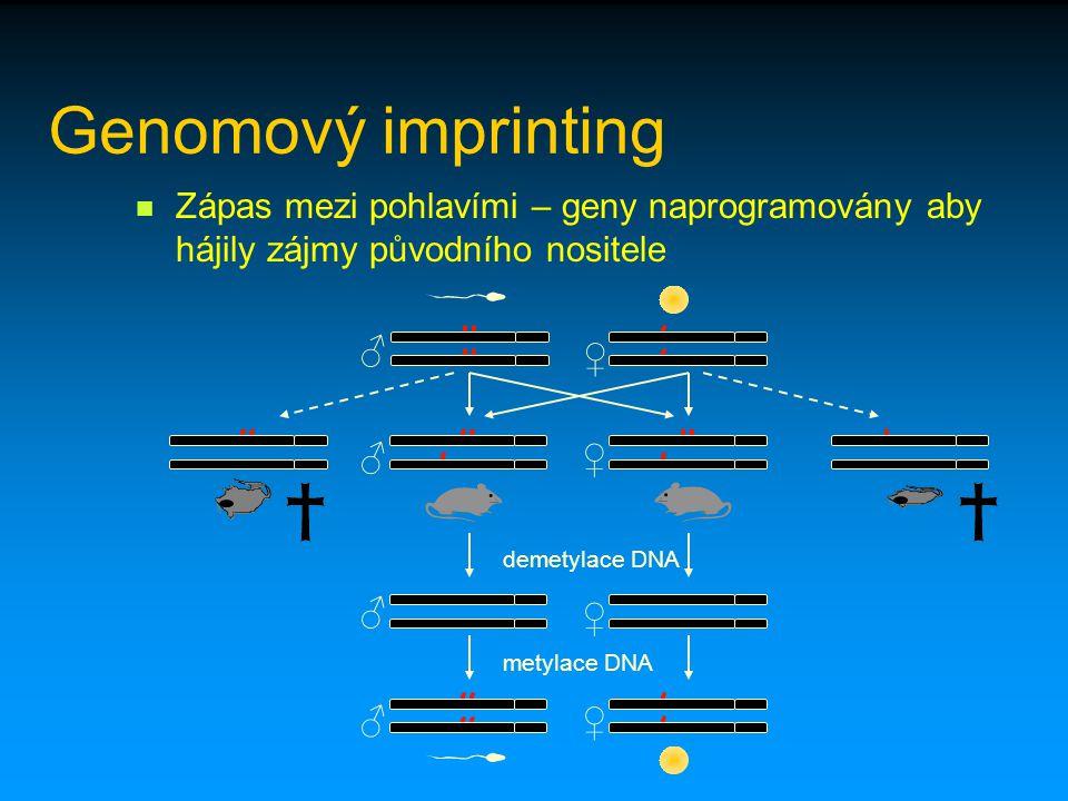 Genomový imprinting Zápas mezi pohlavími – geny naprogramovány aby hájily zájmy původního nositele.