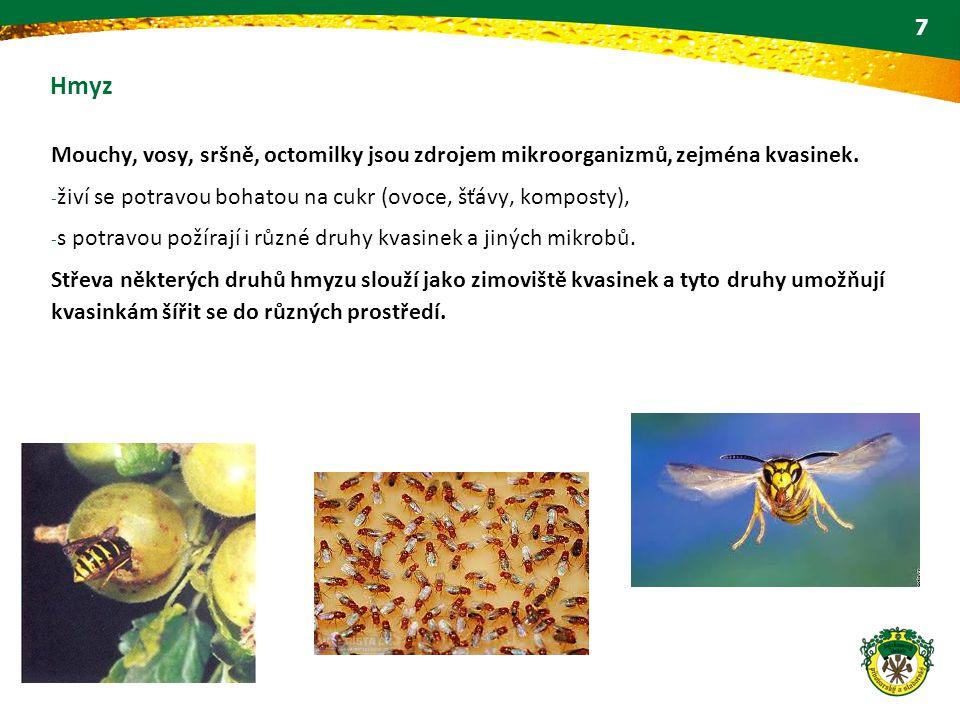 Hmyz Mouchy, vosy, sršně, octomilky jsou zdrojem mikroorganizmů, zejména kvasinek. živí se potravou bohatou na cukr (ovoce, šťávy, komposty),