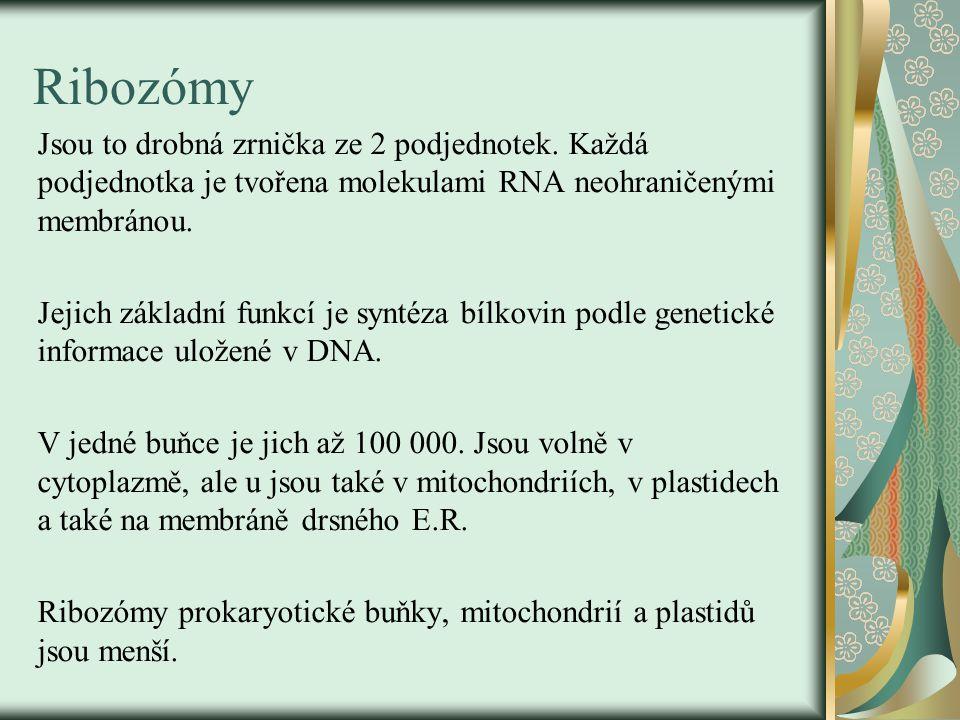 Ribozómy Jsou to drobná zrnička ze 2 podjednotek. Každá podjednotka je tvořena molekulami RNA neohraničenými membránou.