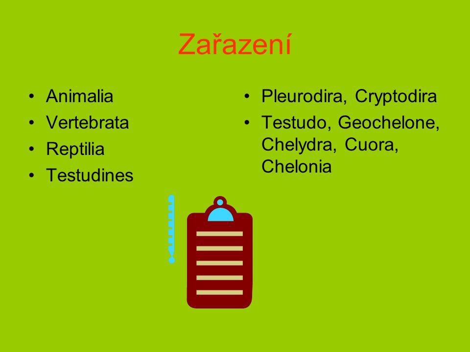 Zařazení Animalia Vertebrata Reptilia Testudines