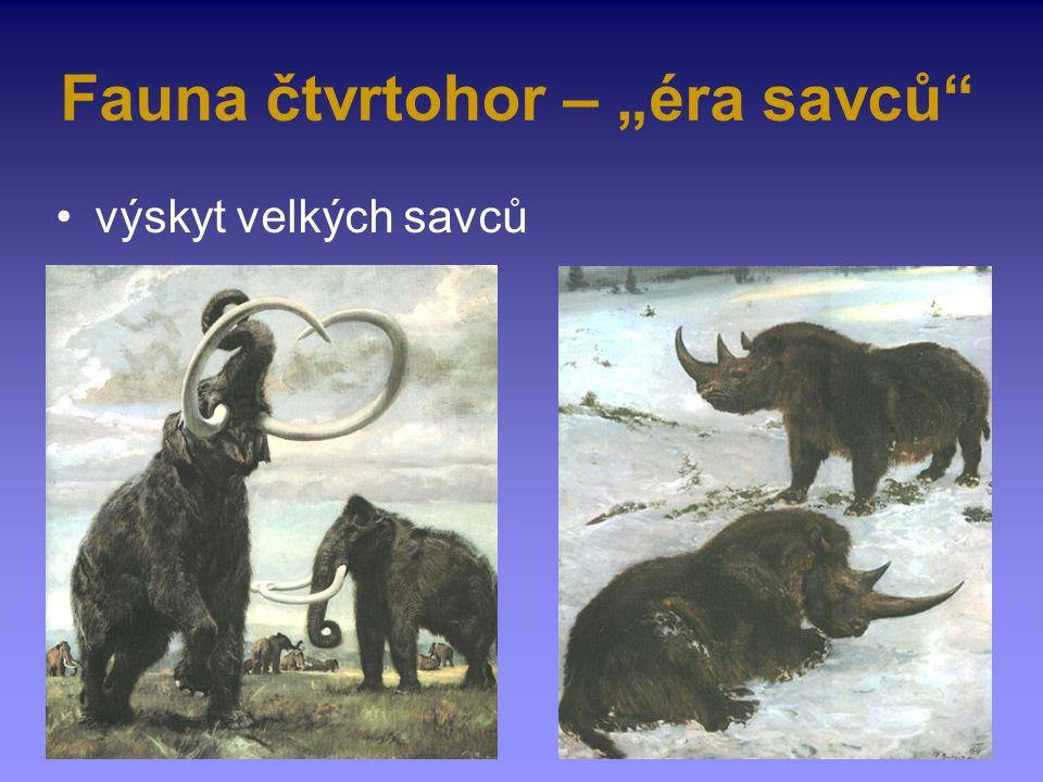 "Fauna čtvrtohor – ""éra savců"