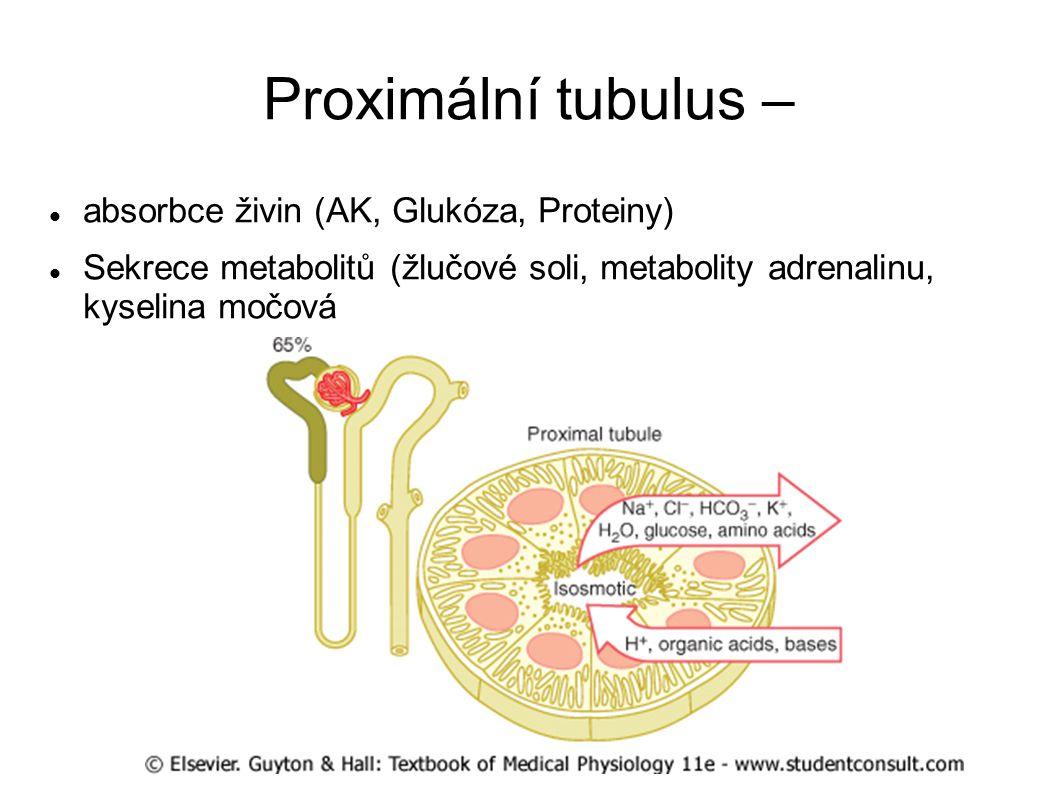 Proximální tubulus – absorbce živin (AK, Glukóza, Proteiny)