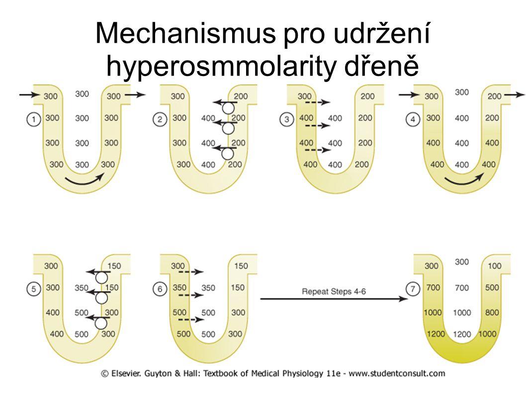 Mechanismus pro udržení hyperosmmolarity dřeně