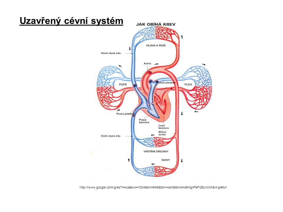 Uzavřený cévní systém http://www.google.cz/imgres hl=cs&biw=1024&bih=546&tbm=isch&tbnid=o6MgnFaFQ8uXcM:&imgrefurl.