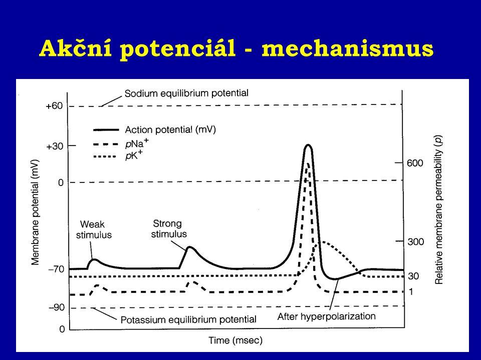 Akční potenciál - mechanismus