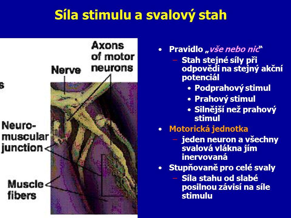 Síla stimulu a svalový stah