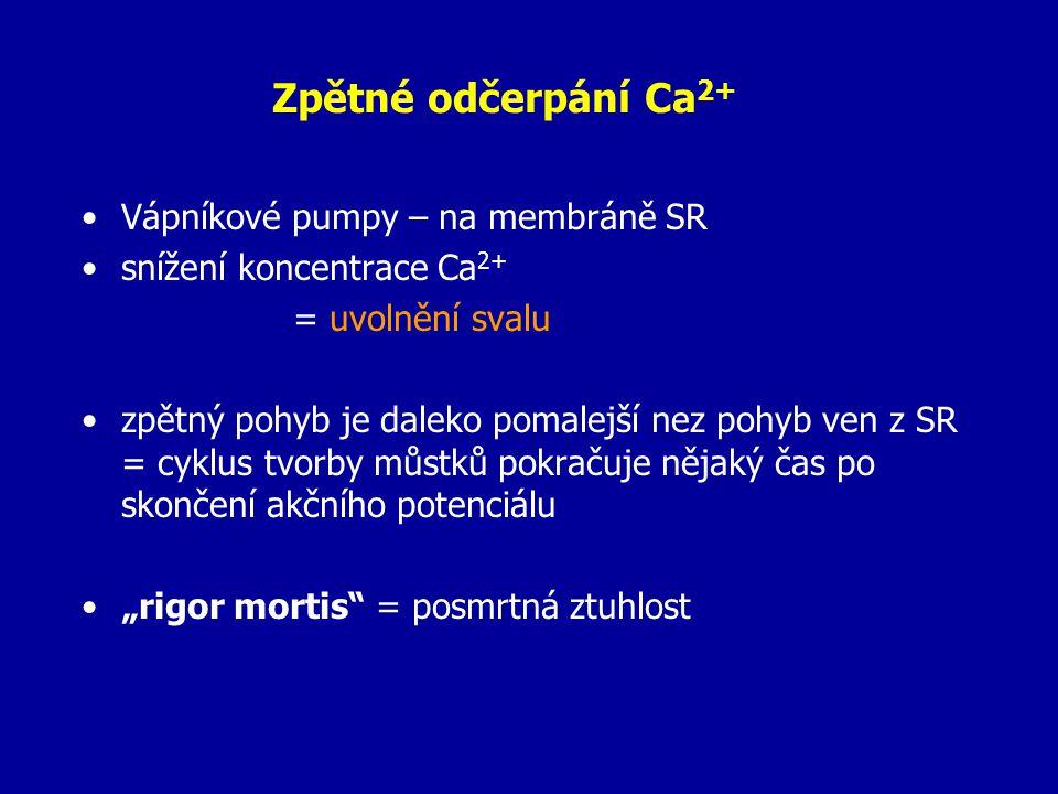 Zpětné odčerpání Ca2+ Vápníkové pumpy – na membráně SR