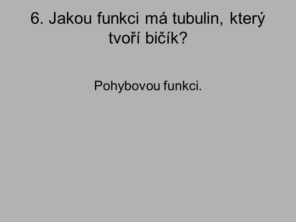 6. Jakou funkci má tubulin, který tvoří bičík