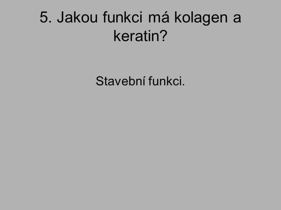 5. Jakou funkci má kolagen a keratin