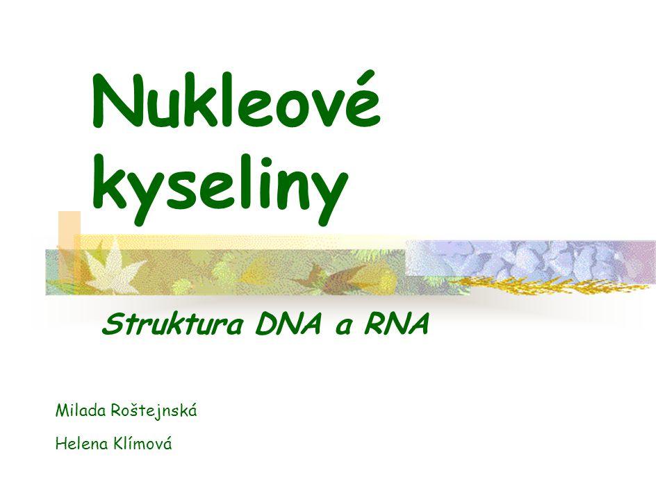Nukleové kyseliny Struktura DNA a RNA Milada Roštejnská Helena Klímová