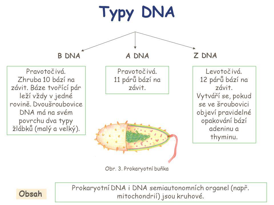 Typy DNA Obsah B DNA A DNA Z DNA Pravotočivá.