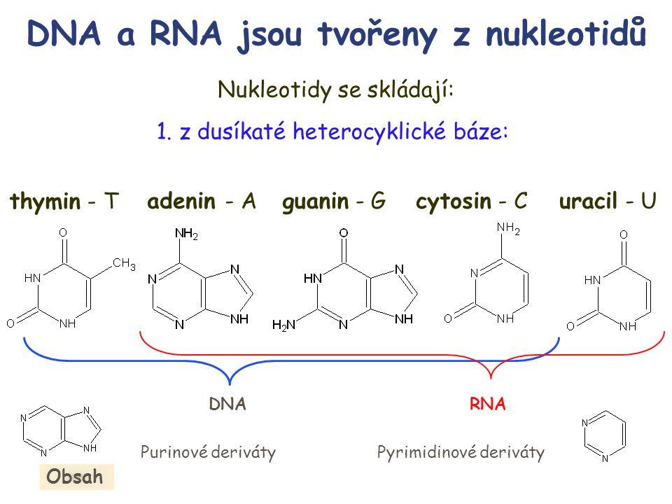 DNA a RNA jsou tvořeny z nukleotidů
