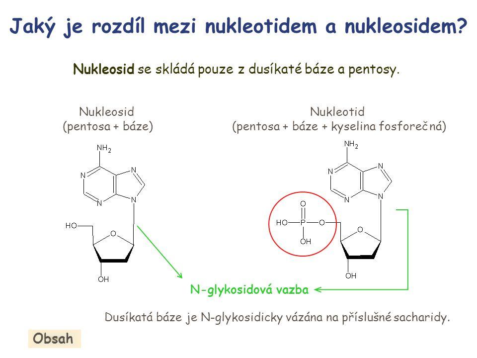 Jaký je rozdíl mezi nukleotidem a nukleosidem